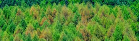 からまつ林