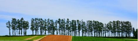 今年もおわった 赤麦の丘